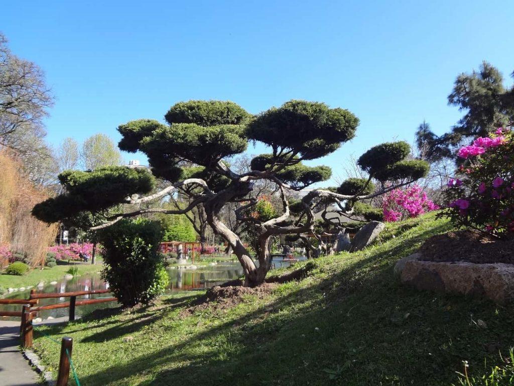 Imagen Jardín Japonés en Buenos Aires Argentina. Cicerone Plus