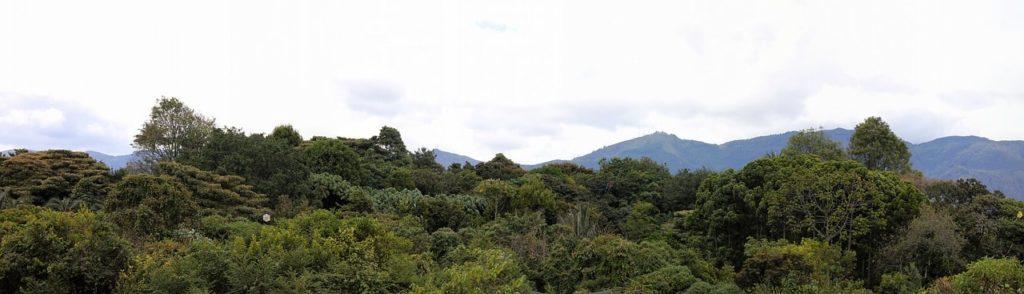 Imagen Jardín Botánico José Celestino Mutis de Bogotá en Colombia. Cicerone Plus
